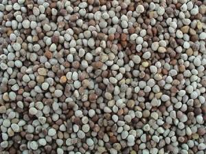 Perilla Seed