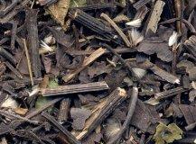 Clematis root
